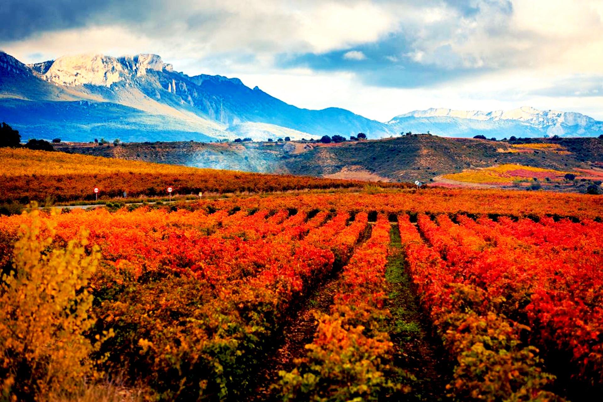 Feliz día de La Rioja 2013 by Pako Campo