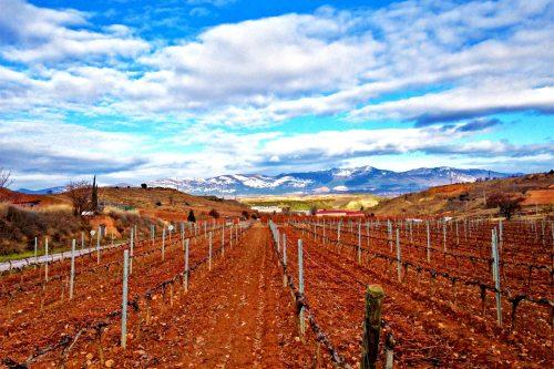 Vineyards by Pako Campo