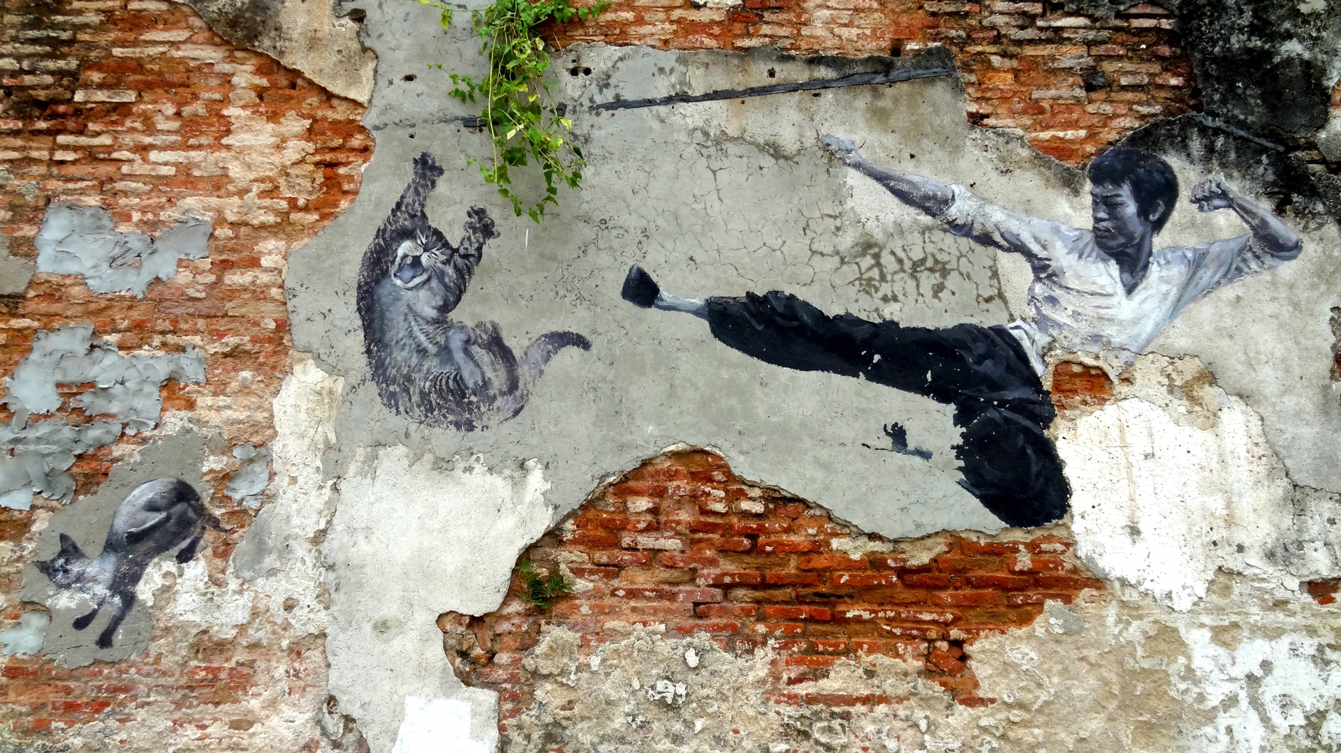 Bruce Lee Cat Mural (2013) by ASA - Pako Campo
