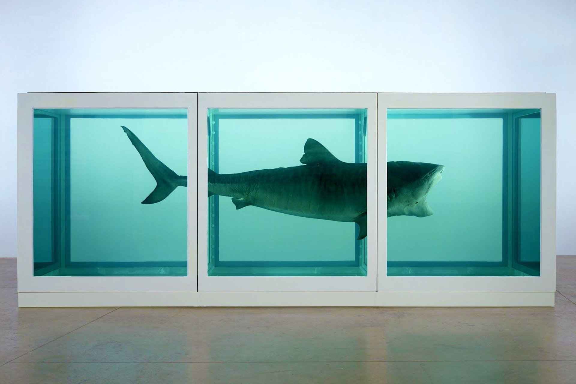 The Physical Impossibility of Death in the Mind of Someone Living (1991) by Damien Hirst - Pako Campo