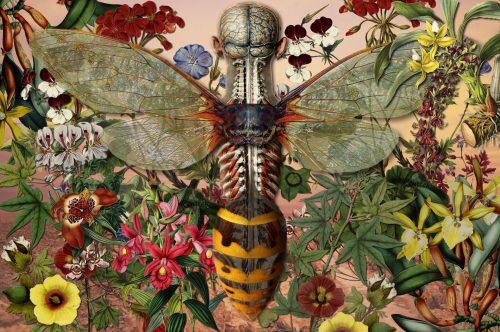 Ciencias Naturales V - Metamorfosis (2011) by Juan Gatti - Pako Campo